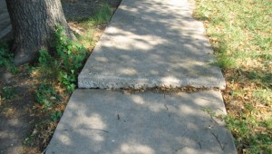 Side walk damage from tree roots
